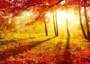 otoño, bodas, wedding planner, enabodate, ideas
